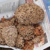 福州白蚁防治|提供口碑好的白蚁防治