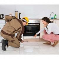 南安套房店铺白蚁防治|提供专业靠谱的套房店铺白蚁防治