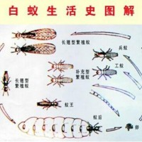 福建白蚁防治-福建可信赖的白蚁防治推荐