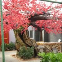 仿真枫树-哪里有提供优惠的西安假树