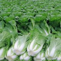 西乡蔬菜配送价格-东莞专业的蔬菜配送服务公司