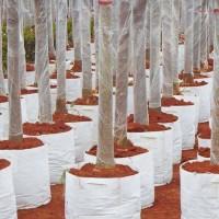 洛阳出口种植袋-郑州纯挚环保科技有限公司新品种植袋介绍